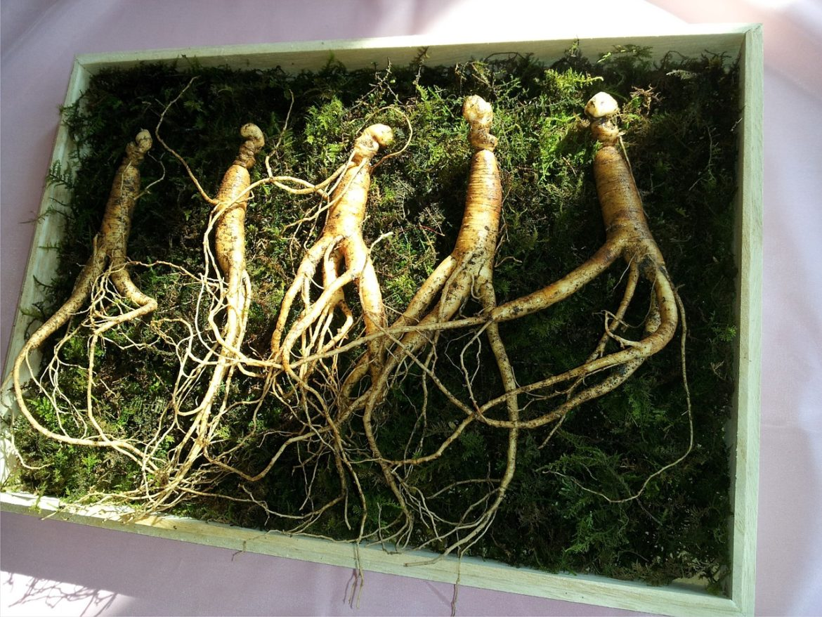 Ginseng als alternatives Potenzmittel